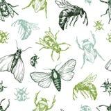Insectenpatroon Stock Fotografie