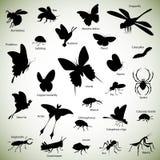 Insectensilhouetten Stock Foto's