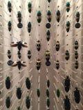 Insectenspecimen Stock Afbeeldingen