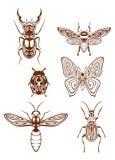 Insectentatoegeringen in stammenstijl Royalty-vrije Stock Afbeelding