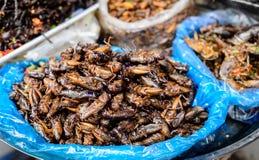 Insectenvoedsel in Kambodja Stock Foto's