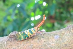 Insectes à ailes par vert Photos stock