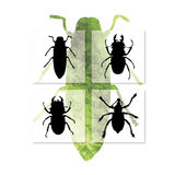 Insectes Image stock