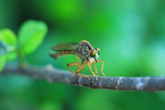 insectes Photographie stock