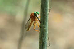 insectes Photo stock