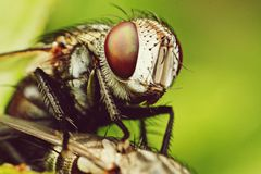 insectes Images stock