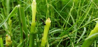 insectes Photos libres de droits