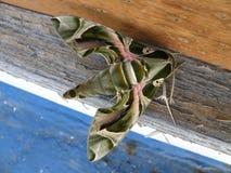Insectes africains Image libre de droits