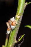 Insectes d'échelle image libre de droits