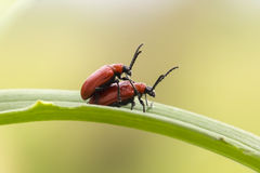 Insectes d'amour Photographie stock