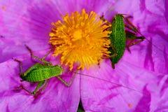 Insectes d'une fleur deux image stock