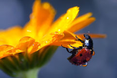 Insectes dans la nature Photos stock