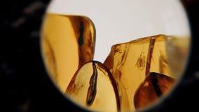 Insectes dans les pierres de l'ambre Pierres ambres en gros plan banque de vidéos