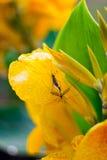 Insectes de accouplement Photographie stock libre de droits