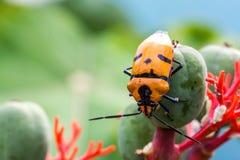 Insectes de bijou image libre de droits