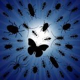 Insectes de nuit Photographie stock