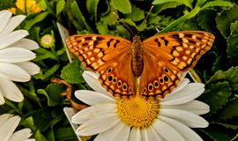 Insectes de ressort Photographie stock