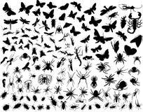 Insectes de vecteur Image stock
