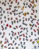 Insectes en métal image libre de droits