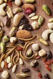 Insectes et écrous comestibles Photographie stock libre de droits
