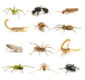 Insectes et arachnides Images stock