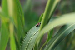 Insectes et cultures photos stock