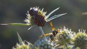 Insectes, insectes et une guêpe sur l'herbe banque de vidéos