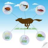 Insectes et usines dangereux d'Infographics au sujet dont causez allergique illustration libre de droits