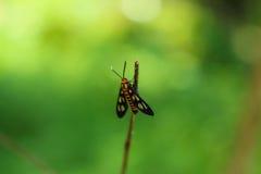 Insectes fatigués Image stock