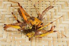 Insectes frits croustillants avec le fond de vannerie Photographie stock libre de droits