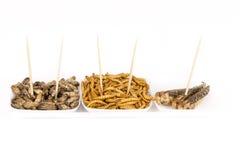 Insectes frits de sauterelles de molitors de crickets Image libre de droits