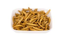 Insectes frits Molitors, aliment riche en protéines Photographie stock libre de droits