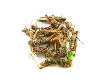 Insectes frits, nourriture étonnante Images stock