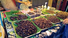 Insectes frits par nourriture asiatique de rue Images stock