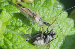 Insectes macro Images libres de droits