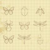 Insectes noirs et blancs illustration libre de droits