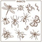 Insectes qui mouche et croquis monochromes de sépia de fluage illustration libre de droits