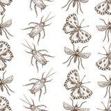 Insectes qui mouche et modèle sans couture de croquis monochromes de sépia de fluage illustration libre de droits