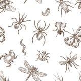 Insectes qui mouche et modèle sans couture de croquis monochromes de sépia de fluage illustration de vecteur