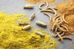 Insectes rôtis comestibles Photos stock