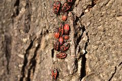 Insectes rouges Images stock