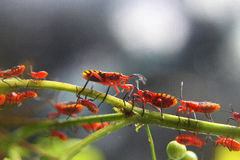 Insectes rouges Photo libre de droits