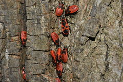 Insectes rouges Photographie stock libre de droits