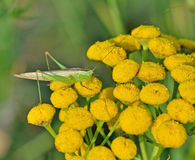 Insectes sur des fleurs en automne tôt Photo libre de droits