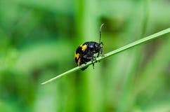 Insectes sur l'herbe photo stock
