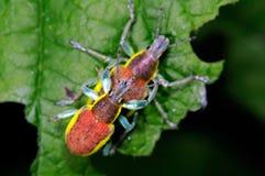 Insectes sur la feuille verte photos stock