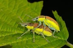 Insectes sur la feuille verte photographie stock libre de droits