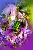 Insectes sur la fleur photographie stock libre de droits
