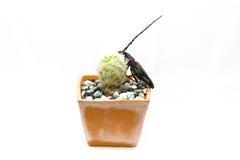 Insectes sur un cactus Images libres de droits