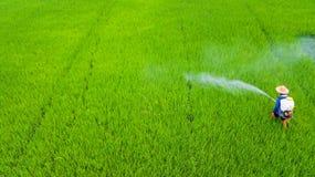 Insecticide de jet d'agriculteur dans la ferme de riz photos stock